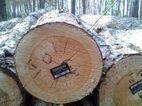 Гослесагенство обеспечило полный электронный учет всей заготовленной древесины