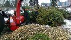 Утилизация елок: куда деть дерево после окончания праздников