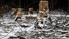 За последние 15 лет в столице вырубили 12 тыс. гектаров леса