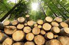 Систему электронных торгов древесиной хотят приватизировать — СМИ