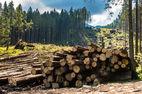 В Украине вводится уголовная ответственность за контрабанду леса: на сколько можно «загреметь»