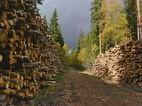В сентябре 2018 г. Финляндия увеличила заготовку древесины на 3%