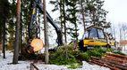 Латвия не сумела выкупить у шведов тысячи гектаров своих лесов
