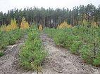 14% созданных прошлом году в Украине лесов висаджено на Житомирщине