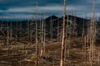 В Украине из-за изменения климата активизировался процесс усыхания лесов - эксперт