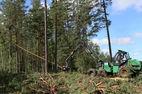 В Беларуси увеличена таксовая стоимость древесины на корню