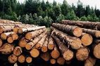В ноябре 2018 г. стоимость сделок с круглым лесом в Словении снизилась на 5%